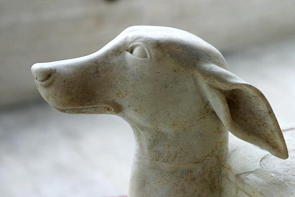 greekdog